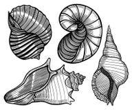 Hand drawn set of various seashell. vector illustration