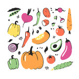Hand drawn set of vegetable. Vector artistic drawing food. Summer illustration red onion, pumpkin, radish, potato Royalty Free Stock Photo