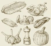 Hand-drawn set vegetables Royalty Free Stock Photos