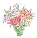 Hand drawn set of watercolor flowers Lilium Lily Lilies Stock Photography