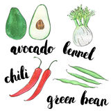 Hand drawn set of watercolor vegetables avocado fennel chili gre Stock Images