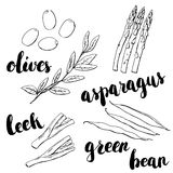 Hand drawn set of watercolor vegetables olives green bean leek a Stock Images