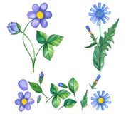 Hand drawn set of watercolor violet and blue flowers vector illustration
