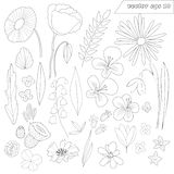 Hand drawn set of wild outlined flowers royalty free stock photography