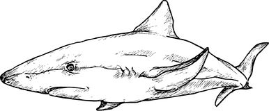 Hand drawn shark Stock Images