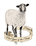 Hand drawn sheep Royalty Free Stock Images