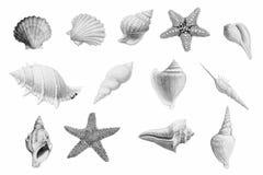 Hand drawn shellfish and starfish on white background. stock illustration