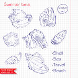 Hand-drawn shells. Vector. Summer time Royalty Free Stock Photo
