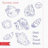 Hand-drawn shells. Vector. Summer time Vector Illustration