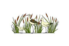 Hand drawn shorebirds. Vector illustration of hand drawn cute sandpipers standing among water plants. Beautiful animal design elements, ink drawing, logo Stock Photography