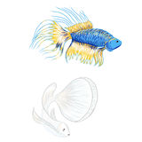 Hand drawn siamese fighting fish, beautiful fish. Hand drawn siamese fighting fish, isolate vector set Stock Image