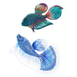 Hand drawn siamese fighting fish, isolate vector Stock Photography