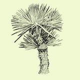 Hand drawn single palm tree Royalty Free Stock Photography