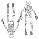 Hand drawn skeleton Stock Photography
