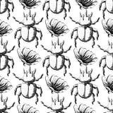 Hand drawn Sketch Beetles Seamless Pattern Royalty Free Stock Photos