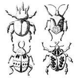 Hand drawn sketch beetles set Royalty Free Stock Photo