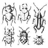 Hand drawn sketch beetles set Royalty Free Stock Image