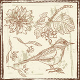 Hand drawn sketch of  bird, autumn berries and flowers. Royalty Free Stock Images