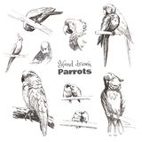 Hand-drawn sketch birds.  Monochrome black and white parrots: budgerigar, cockatoo, macaw, corella, lovebird, jaco. royalty free illustration
