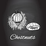 Hand drawn sketch chestnuts vector Black and white kitchen art, Kitchen decor, rustic background Stock Images