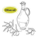 Hand drawn sketch - collection of olive oil bottles with olive branches and olive berries Stock Photography