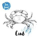 Hand drawn sketch crab with big claws. Seafood vector illustration. For menu, restaurants or markets Royalty Free Stock Images