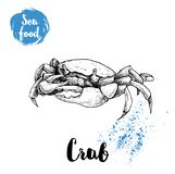 Hand drawn sketch crab. Seafood and wildlife sean and ocean animals vector illustration. EPS10 + JPEG preview Stock Image