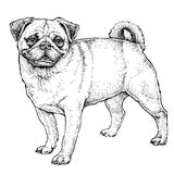 Hand drawn sketch of cute funny Pug Dog. Vector Illustration Royalty Free Stock Photo