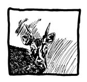 Hand drawn sketch of a deer in frame. On white background Royalty Free Stock Images