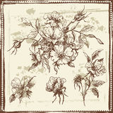 Hand drawn sketch of  dog rose flowers Stock Images