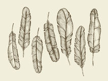 Hand drawn sketch feathers, plumage, fluff.  vintage writing feather. Vector illustration Royalty Free Stock Photos