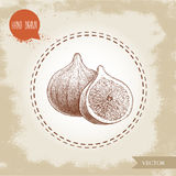 Hand drawn sketch figs. Vintage eco food drawing. Whole fruit and half of fig Royalty Free Stock Image