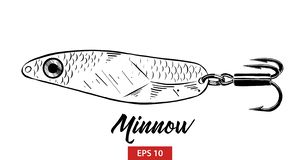 Hand drawn sketch of fish minnow in black isolated on white background. Detailed vintage etching style drawing. royalty free illustration