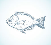 Hand drawn sketch fish. Vector illustration Royalty Free Stock Image
