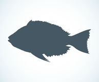Hand drawn sketch fish. Vector illustration Royalty Free Stock Photo