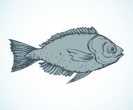 Hand drawn sketch fish. Vector illustration Stock Photos