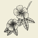 Hand drawn sketch Flower. Royalty Free Stock Images