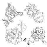 Hand-drawn sketch with flowers Stock Images