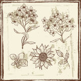 Hand drawn sketch of garden flowers Royalty Free Stock Photography