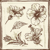 Hand drawn sketch of  hibiscus flowers. All objects are conveniently grouped and are easily editable Royalty Free Stock Photos