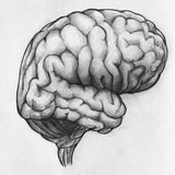 Hand drawn sketch of human brain. Side view, close up stock illustration