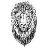 Hand drawn sketch of lion head. Vector illustration. Stock Images
