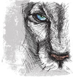 Hand drawn Sketch of a lion. Looking intently at the camera Royalty Free Stock Image