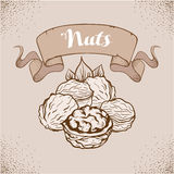 Hand drawn sketch nuts Stock Photography