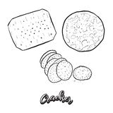 Hand Drawn Sketch Of Cracker Bread Royalty Free Stock Image