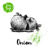 Hand drawn sketch onions with parsley leafs. Whole root composition. Farm fresh vegetables poster. Royalty Free Stock Images