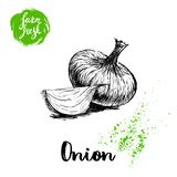 Hand drawn sketch onions. Whole and onion segment. Farm fresh vegetables poster. Royalty Free Stock Photo