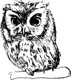 Hand drawn sketch of an owl Royalty Free Stock Images