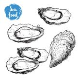 Hand drawn sketch oyster set. Hand drawn illustration  of fresh seafood. Isolated on white background collection. For restaurant menu and market flayers Royalty Free Stock Images
