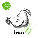 Hand drawn sketch pears composition. Group of whole and half fruits. Vitamin and healthy food vector. Illustration Stock Photos